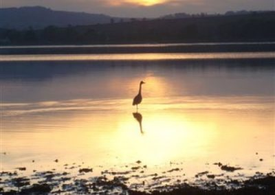Heron at Sowden End by Jenny Clark