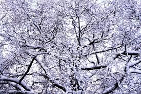Create a winter wonderland in your garden