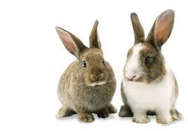 Free rabbits