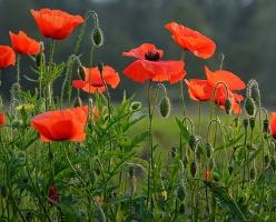 Armistice Centenary Events